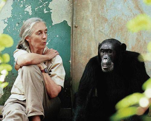 Jane Goodall sitting with chimp