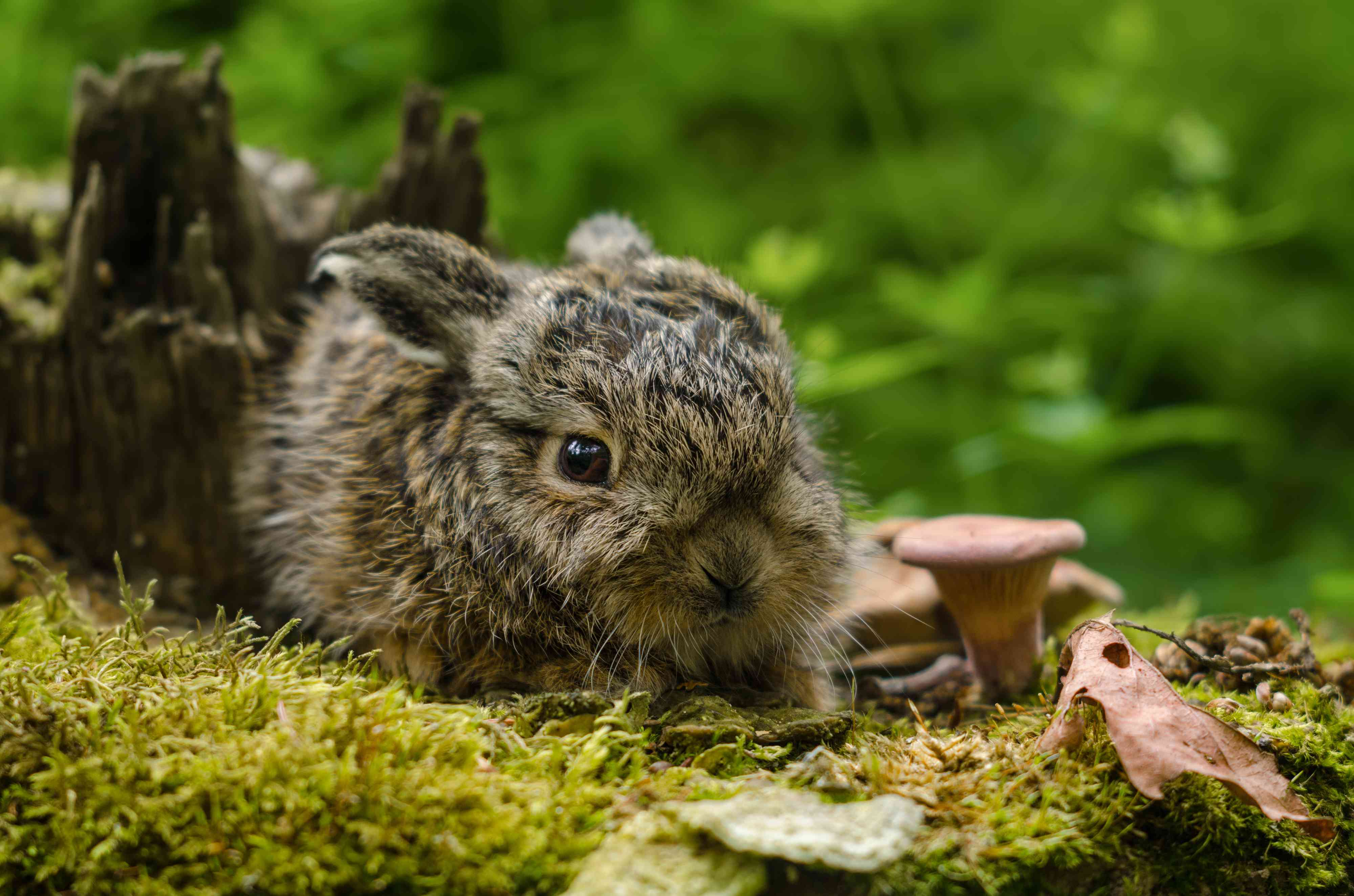 59 Endearing Names For Baby Animals