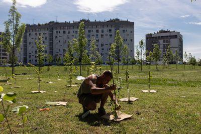 tree planting in Milan
