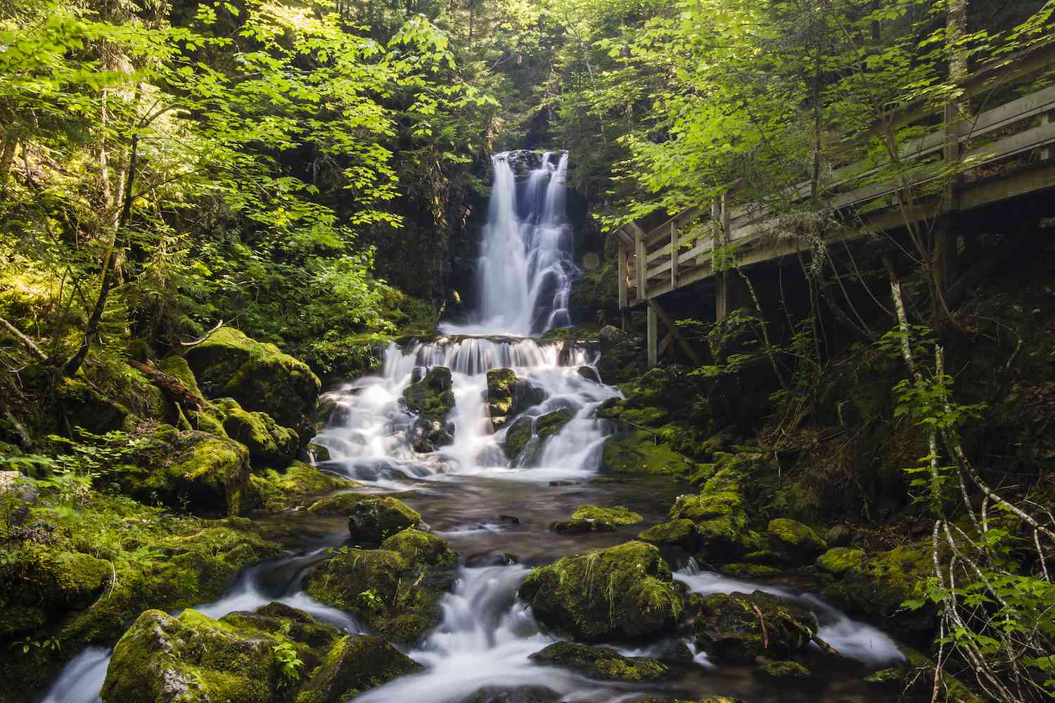 A waterfall flows among a green forest in Fundy National Park