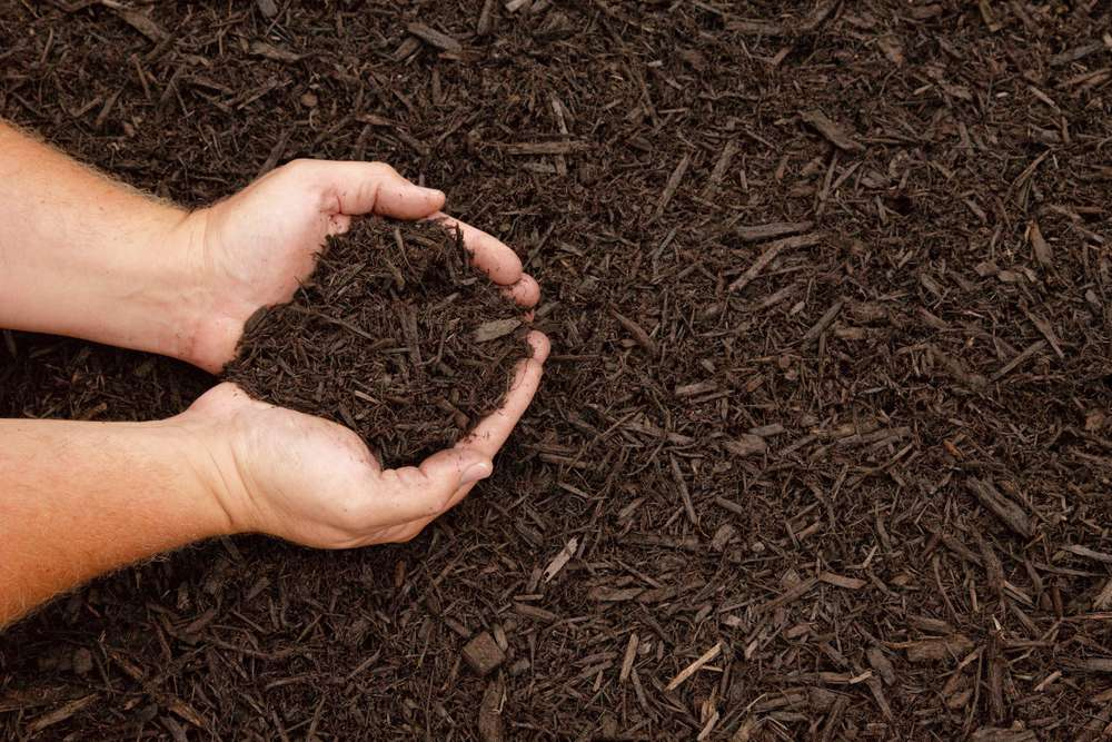 Hands with mulch.