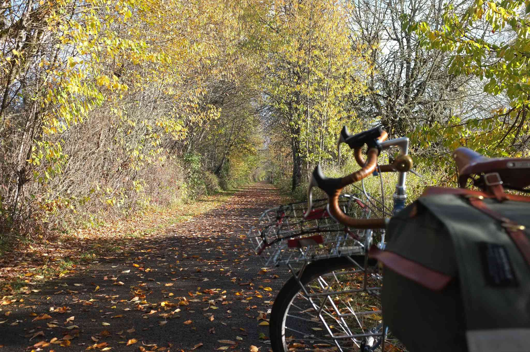 A touring bicycle on a paved bike path in a forest
