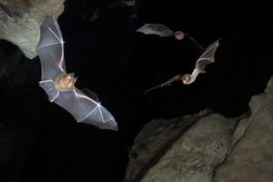 Some species of bats use echolocation to hunt at night