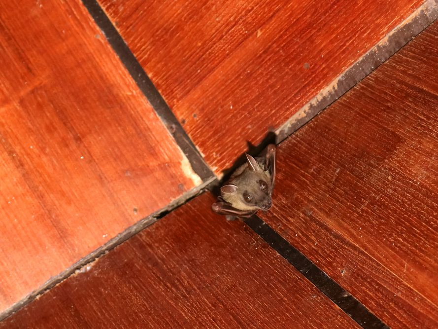 How To Get A Bat Out Of Your House