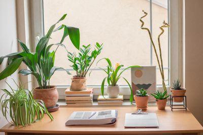 houseplants around a window in a small dorm desk
