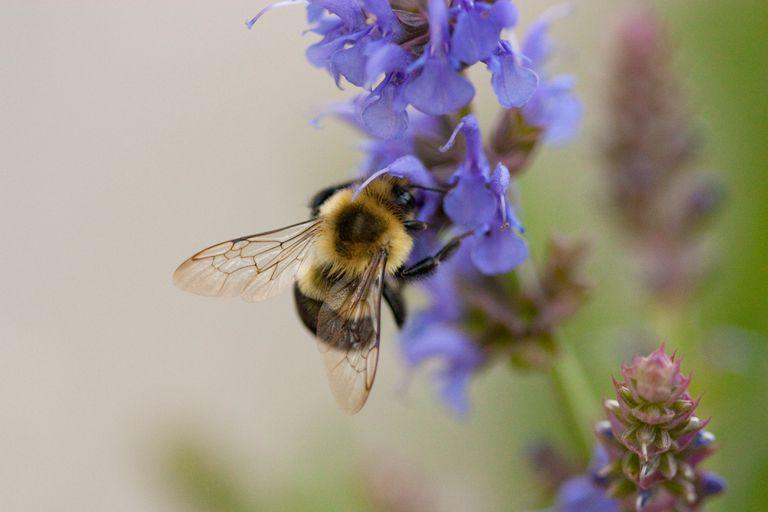 Para salvar a las abejas, la ciudad planea 1,000 acres de pradera