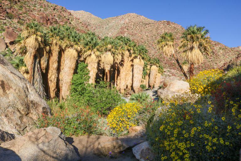 Contempla la belleza única de un verdadero oasis en el desierto