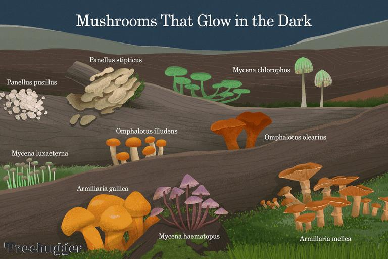 mushrooms that glow in the dark illustration