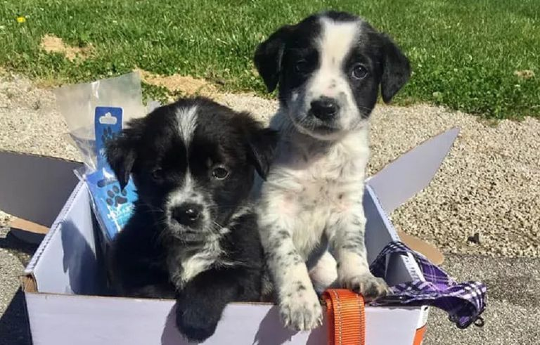 puppies in donation box