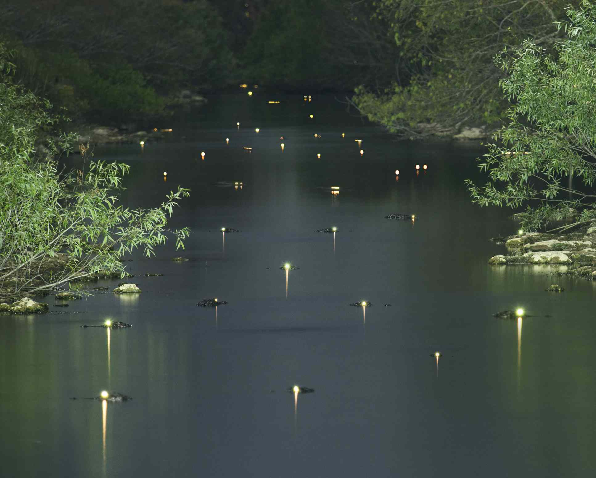 Glowing alligator eyes in a river at night