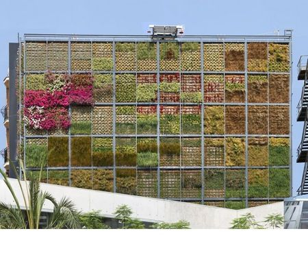 san vincente living wall image