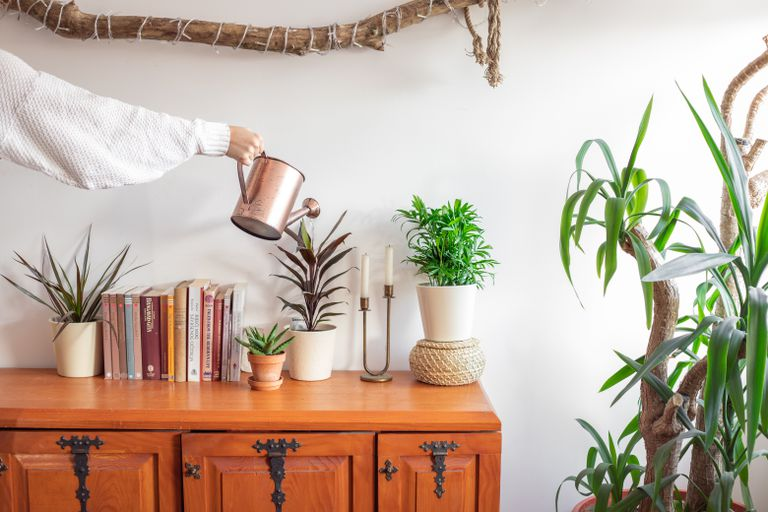 hand in white sweater waters house plants with copper pot