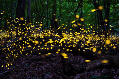 fireflies in a forest at twilight