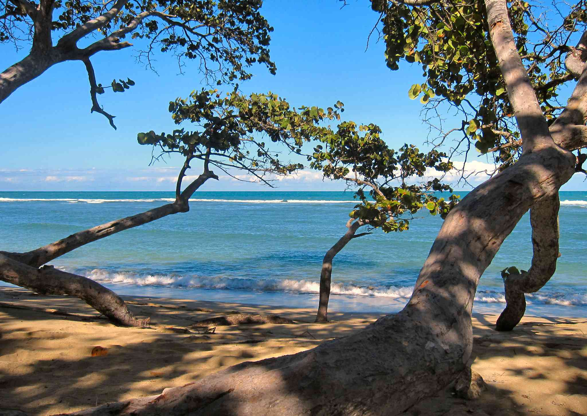 trees bent by wind on Puerto Plata beach in Dominican Republic