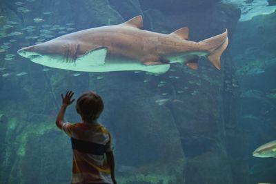 Boy admiring shark in aquarium