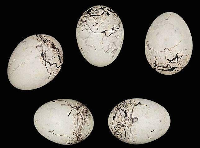 Bunting egg