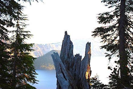 tree stub crater lake photo