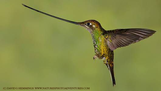 17 Strange and Beautiful Hummingbird Species