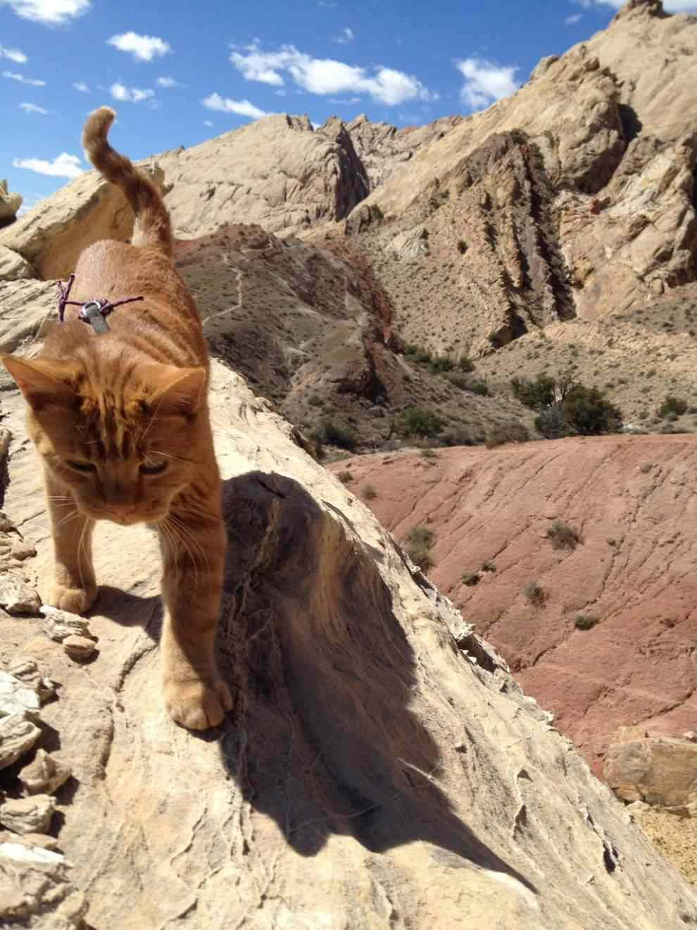 Kenny climbing