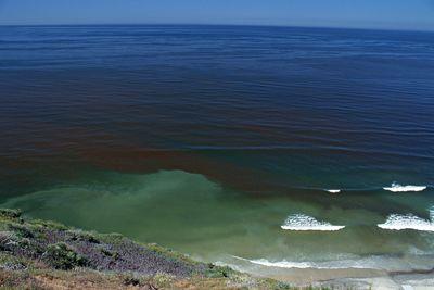 Sudden bloom of dinoflagellates causing red tide, California, USA.