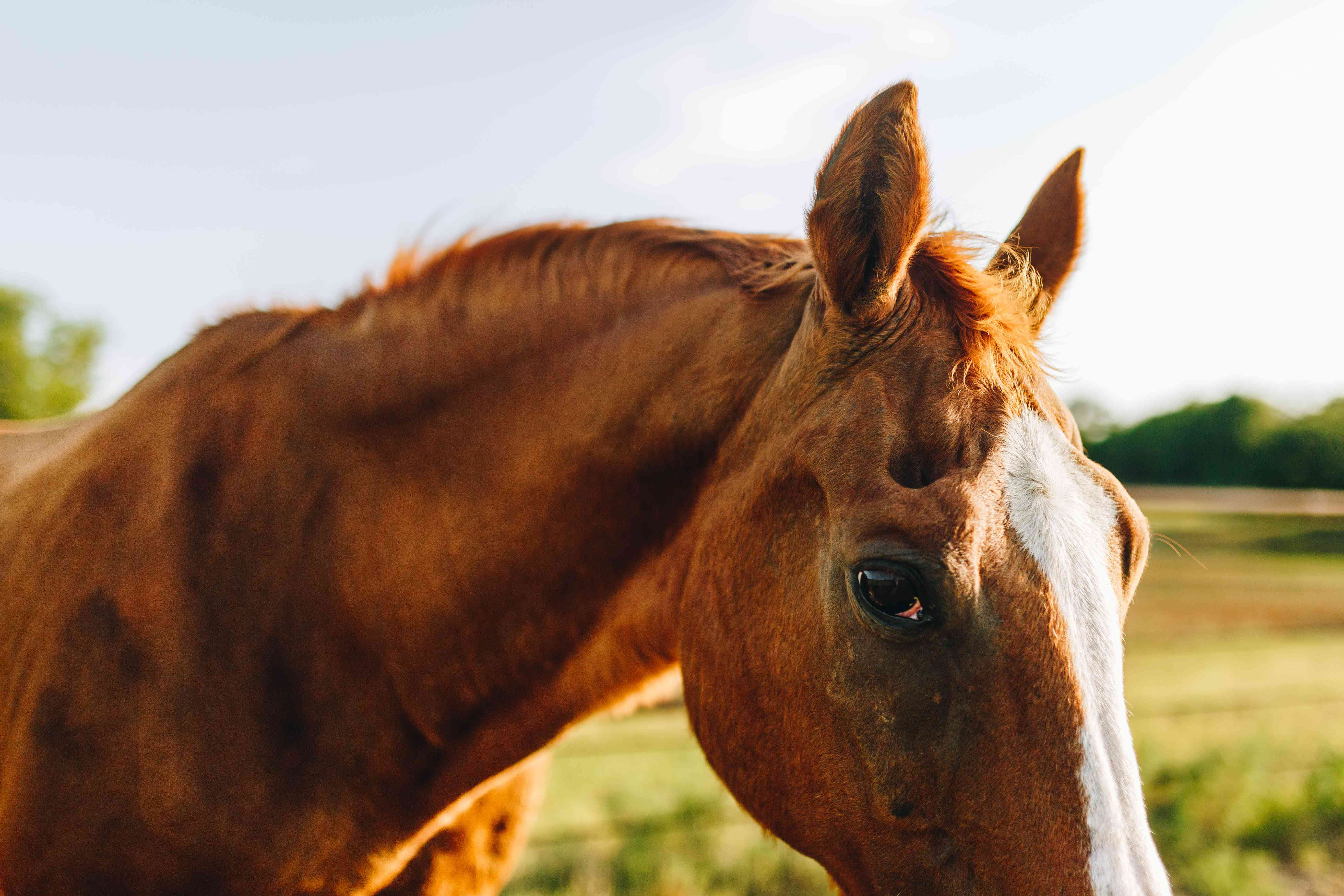 profile shot of brown horse making eye contact