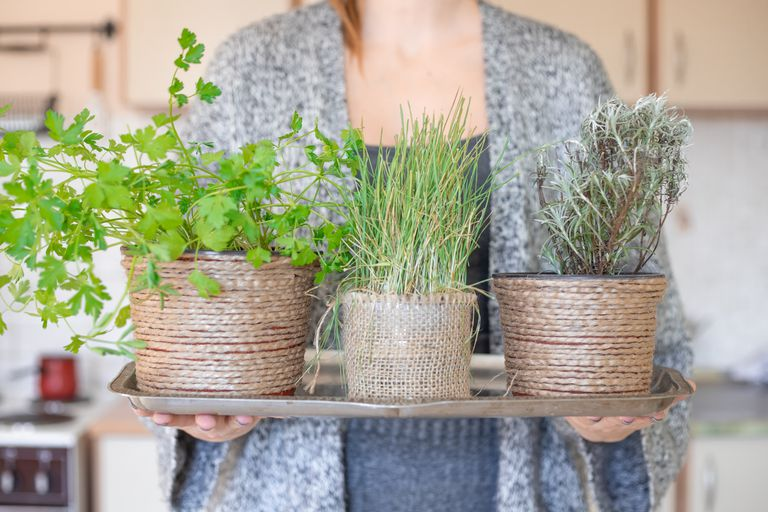 woman in cardigan offers up three houseplants on serving tray