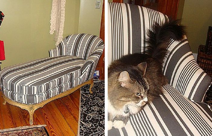 A picture of a black-and-white striped chaise with a cat on it.