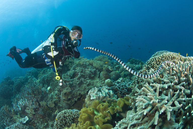 sea snake approaches diver