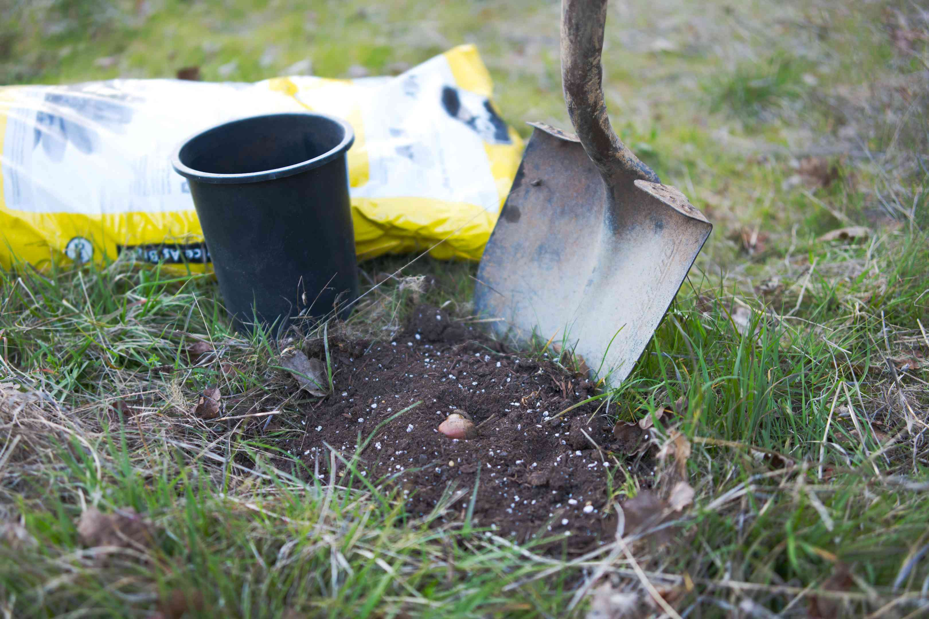 upright shovel in dirt with acorn seed about to be planted next to bag of soil