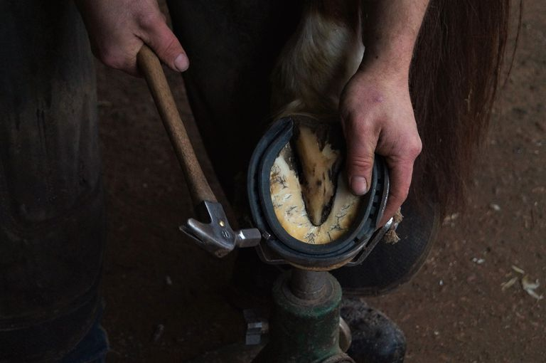 A farrier uses a tool to fit a horseshoe