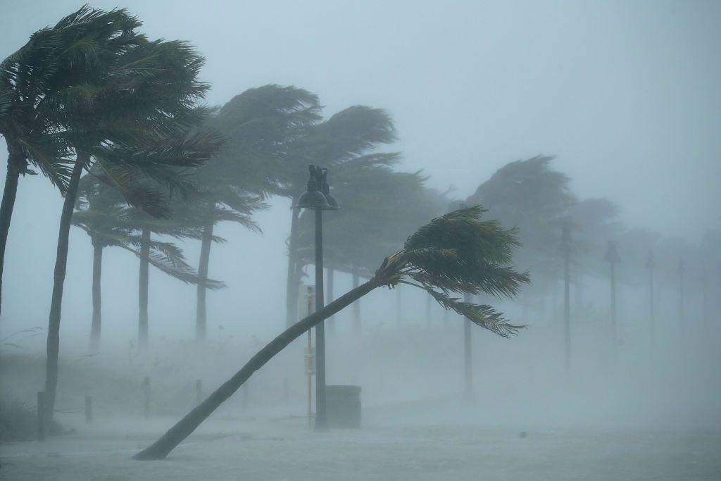 Hurricane Irma's wind bends palm trees