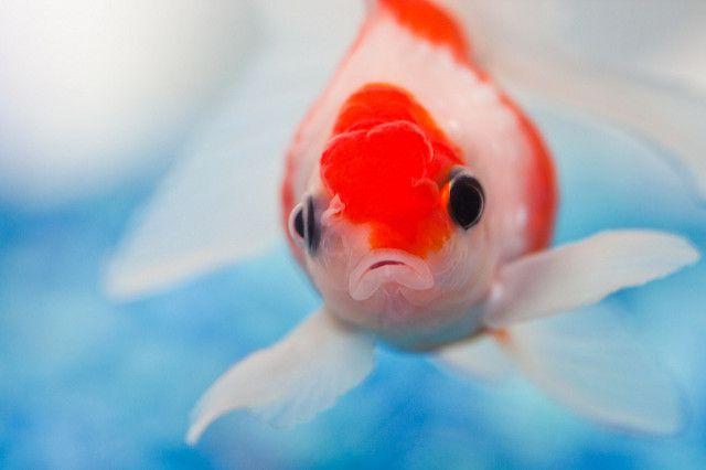 Por qué la gente no debería tomar medicamentos para el pescado