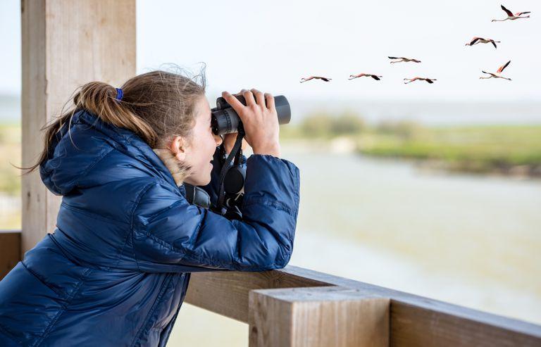 La observación de aves se ha disparado durante la pandemia