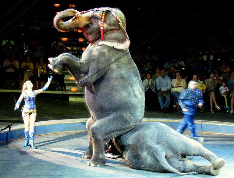 ¿Es hora de decirle adiós al circo?