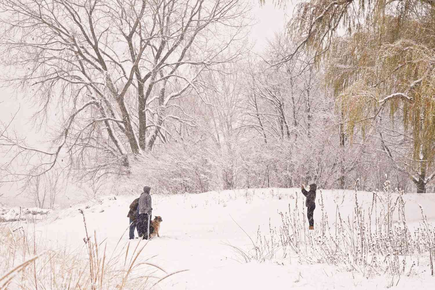 walking the dog in a snowstorm