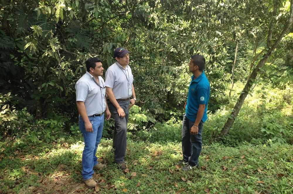 Hondupalma farm consultants