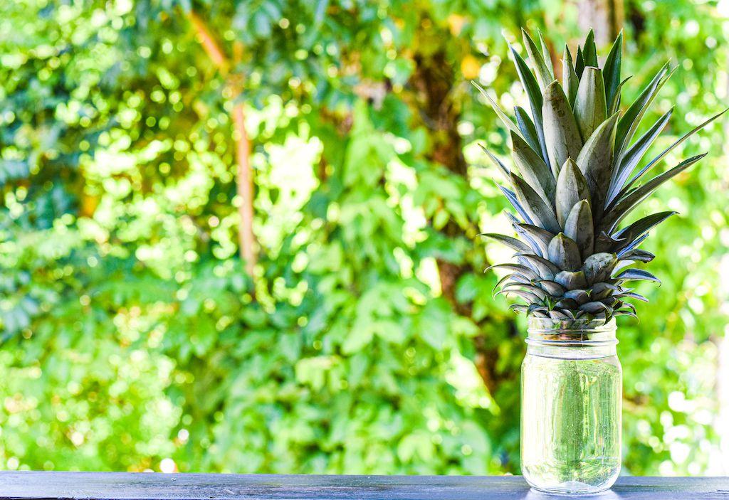 growing pineapple in glass jar