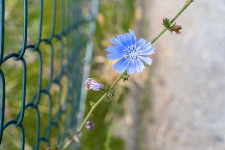 Cómo convertirse en un naturalista de jardín ahora mismo