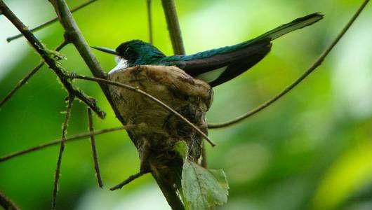 bird sits on a nest