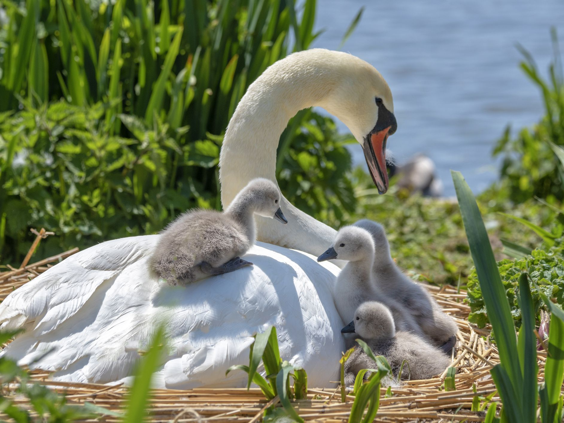 8 Baby Animals That Don't Look Like Their Parents