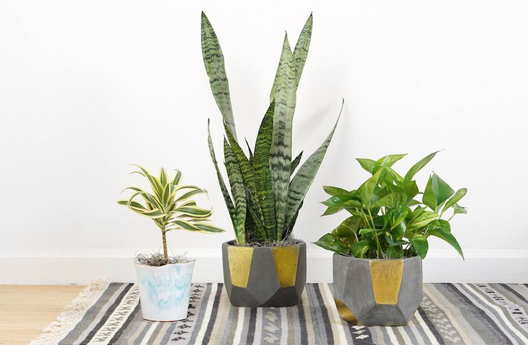El amor de los millennials por las plantas de interior sigue creciendo