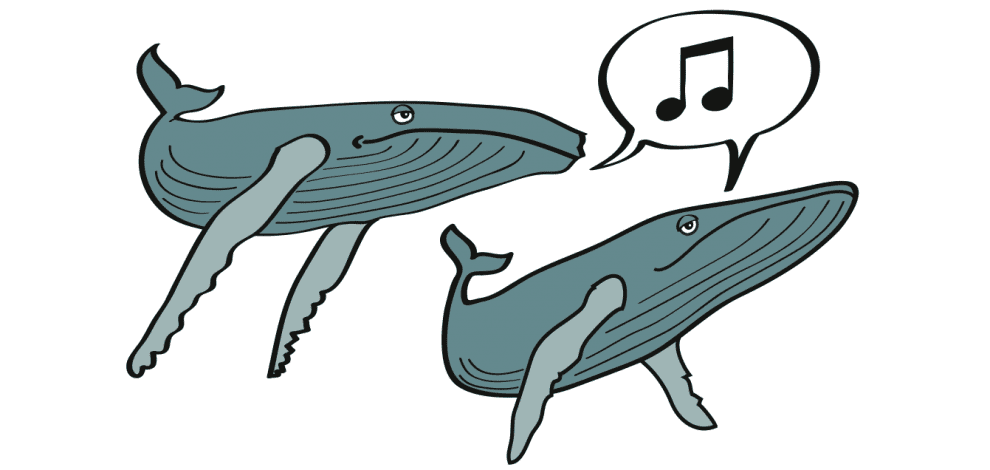 drawing of humpback whales