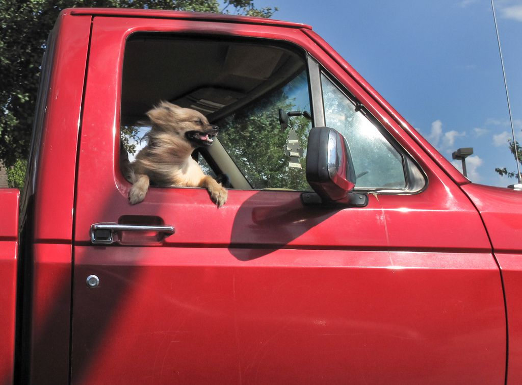 dog sticking head out the truck window