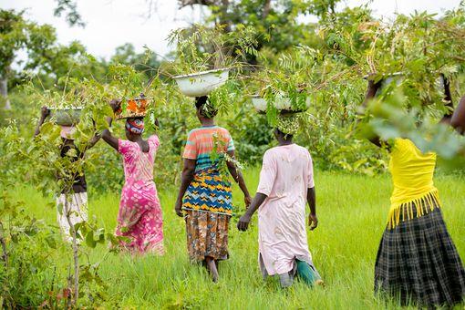 Women walking through a forest-like area.