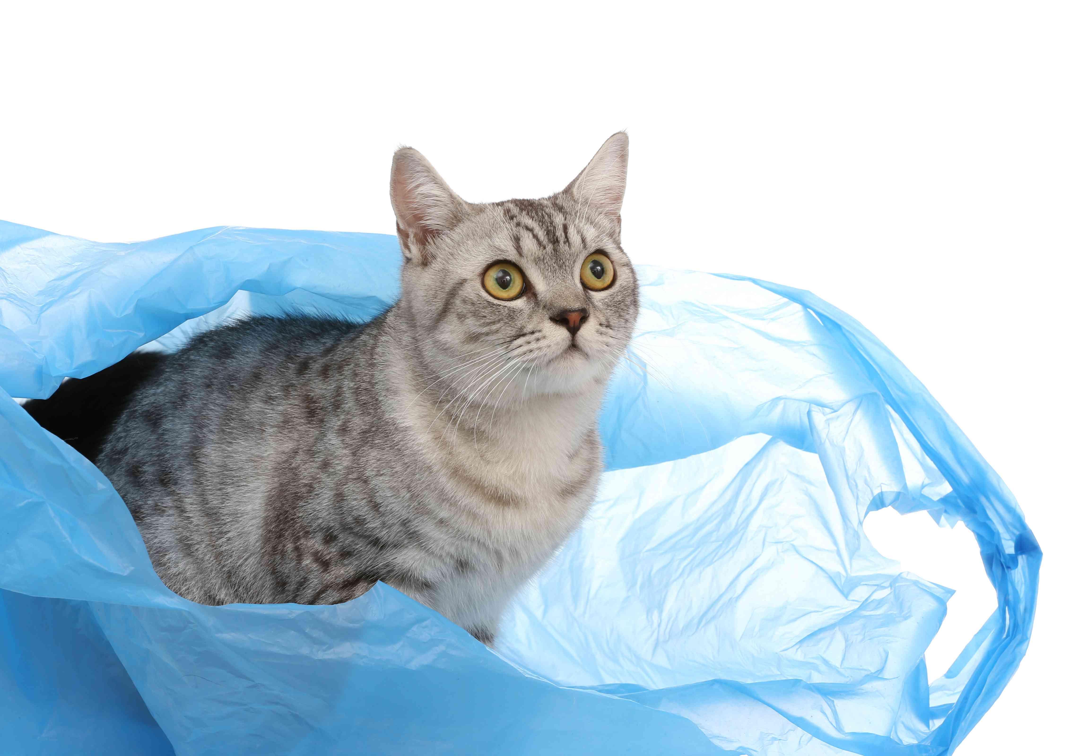 a cat in a blue plastic bag