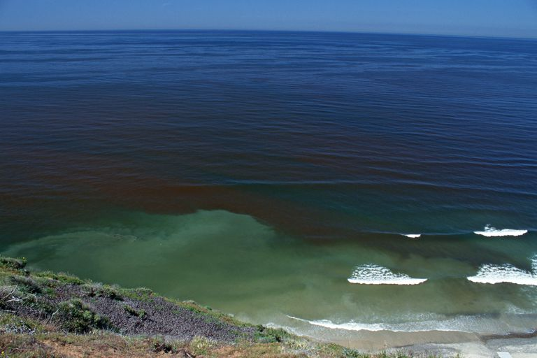 Sudden bloom of dinoflagellates causing red tide, California, USA.