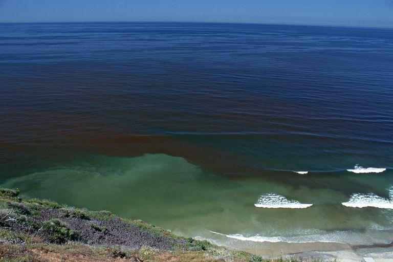 Mareas rojas: causas y efectos