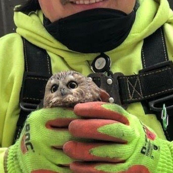 Owl Rescued From Rockefeller Center Christmas Tree