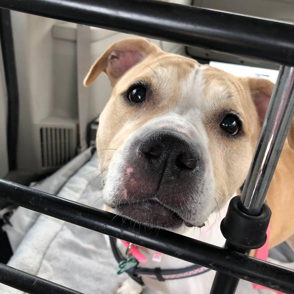 A dog inside a crate