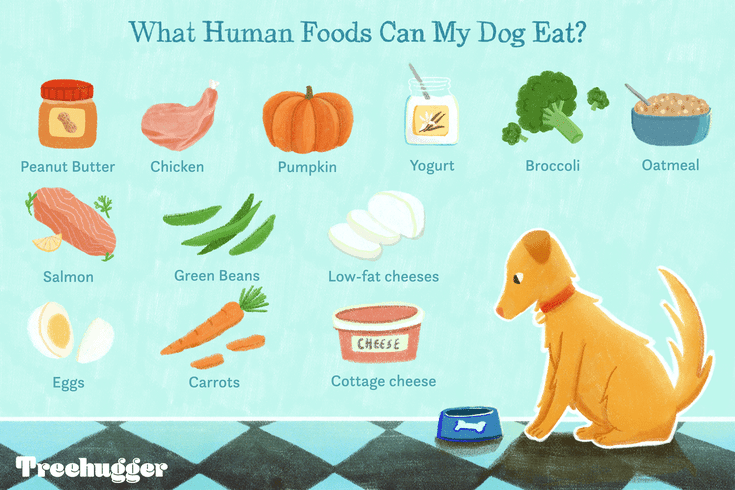 15 Human Foods Dogs Can Eat And 6 They Shouldn T